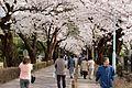 Aoyama Cemetery (3455701193).jpg