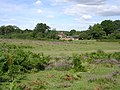 Appleslade Bottom, New Forest - geograph.org.uk - 44261.jpg
