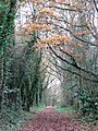 Approaching Lock Road on the Weaver's Way - geograph.org.uk - 1050312.jpg