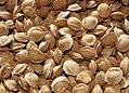 Apricot seeds.jpg