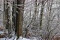April Snow (5) (26245782632).jpg
