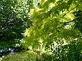 Arbres au jardin Albert Kahn.JPG
