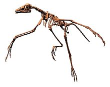 Archaeopteryx Philadelphia white background.jpg