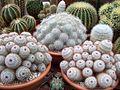 Arthur Tomkins Greenhouse - Mamm overload! (5947791834).jpg