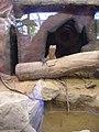 Artis, Zoo, Dierentuin - panoramio (31).jpg