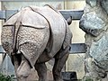 Asian Rhinoceros (1806579211).jpg