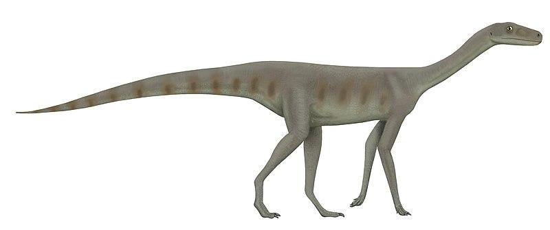 File:Asilisaurus.jpg