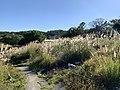 At Hsinchu City First Cemetery 04.jpg