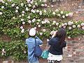 At rose garden. (17265764850).jpg
