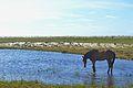 Atins - Maranhão 2.jpg