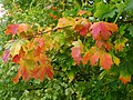 Autumn colour - geograph.org.uk - 1041221.jpg