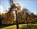 Autumn colours (2) - geograph.org.uk - 574886.jpg
