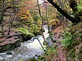 Autumn down in the Dell - geograph.org.uk - 424203.jpg