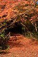 Autumn foliage 2012 (8252572725).jpg