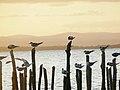 Aves de Bahia, Brasil.jpg