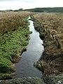 Avon Water - geograph.org.uk - 147288.jpg