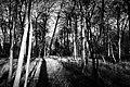 B&W Woods (6621073537).jpg