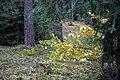 Bór świerkowy - panoramio.jpg