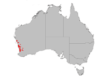 a grey map of Australia, with some red dots on the west coast indicating range of Banksia menziesii