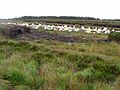 Bags of peat on the Owenwee Peat Cuttings - geograph.org.uk - 1401913.jpg