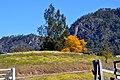 Barrington Tops - panoramio (1).jpg