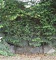 Bautzner Straße 90 Dresden - eventuell die denkmalgeschützte Grotte in der Gartenanlage.jpg