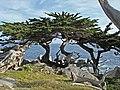 Beautiful Carmel (33347757).jpeg