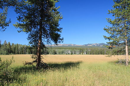 Meadow in Yellowstone National Park Beautiful Meadow in Yellowstone National Park.JPG