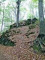 Beech trees - Buchen 14 September 2003.jpg