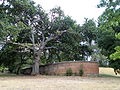 Beechworth Ha Ha from outside.JPG