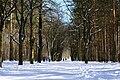 Berlin-Grunewald, Naturfotografie 20, Wald und Weg im Schnee, März 2013.jpg