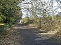 Beside Westwood Coppice - geograph.org.uk - 1755096.jpg