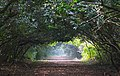 Bhitarkanika National Park inside pathway .jpg