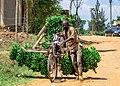 Bike load of matoke.jpg