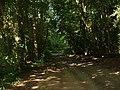 Binsted Woods - geograph.org.uk - 22584.jpg