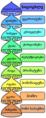 Biological classification L Pengo vflip ka.png