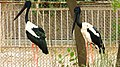 Bird in Lucknow Zoological Garden.jpg