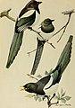 Bird lore (1918) (14568654319).jpg