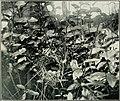 Bird notes (1916) (14564803660).jpg