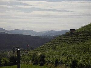 Birmenstorf, Aargau - Terraced vineyards outside Birmenstorf