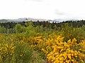 Blackmuir Wood - panoramio (1).jpg