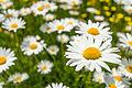 Blooms51 (9092411709).jpg