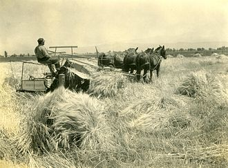 Wheat production in the United States - Boise Valley, Idaho wheat field (c. 1920)