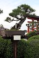 Bonsai (33141282701).jpg