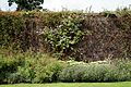 Border shrubs and brick wall at Goodnestone Park Kent England.jpg