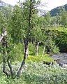 Boreal-forest-with-river-arctic-Norway.JPG