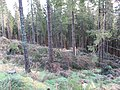 Boreland Forest - geograph.org.uk - 281300.jpg