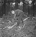 Bosbewerking, arbeiders, boomstammen, gereedschappen, Bestanddeelnr 251-9117.jpg