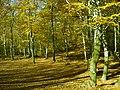 Bosco di san clemente - panoramio.jpg