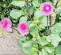 Botanic Gardens In Glasnevin (Dublin) (7951842446).jpg